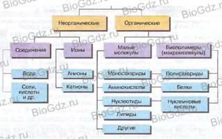 Какой химический состав клетки