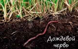 Как дышат малощетинковые черви