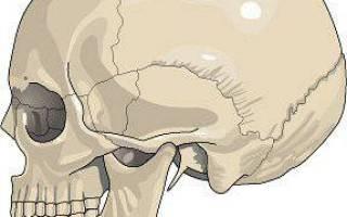 Как называется неподвижное соединение костей