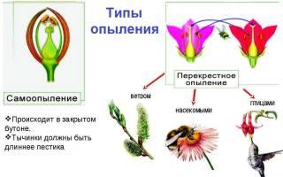 Как происходит опыление у растений